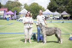 Champion-Dog-1st-Ch.-Ballyasketill-Fagan-of-Zabush