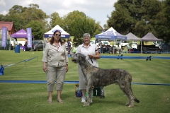 Graduate-Dog-1st-Duross-Drake-of-Glenaran