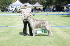 Open-Dog-2nd-Danaan-Tuatha-Ciaran
