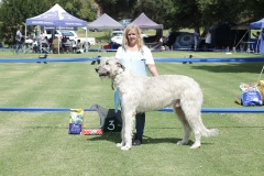 Open-Dog-3rd-Essex-VKSI-Pisen-of-Mukonry
