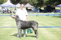 S.A.-Bred-Dog-2nd-Ballyasketill-Falcor-of-Inisfail