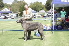 S.A.-Bred-Dog-3rd-Glengarrif-Owain