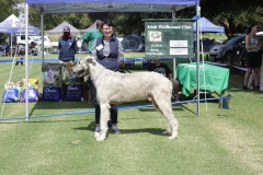 S.A.-Bred-Dog-4th-Brenak-Cullen