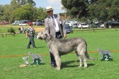 Champ-Dog-1st-Ch-Morgalen-Aenghus-of-Ballyasketill