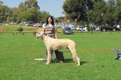 Jnr-Dog-1st=Bilkau-Banbhui