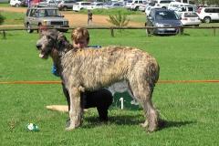 Minor-Puppy-Dog-1st-Pitlochrys-Jack-of-Glengarrif