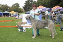 Champion-Dog-3rd-Morgalen-Defiance-of-Mhadaidh