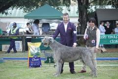 Champion-Dog-1st-Ch