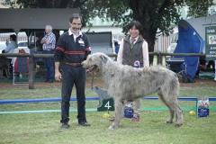 Champion-Dog-4th-Ch