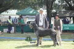 Junior-Dog-1st-Ballyasketill-Wee-Jamie