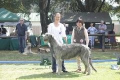 Junior-Dog-2nd-Ballyasketill-Fagan