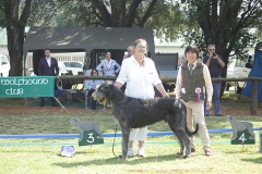 Junior-Dog-3rd-Ballyasketill-Falcor-of-Inisfail