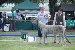 Puppy-Dog-1st-Duross-Drake-of-Glenaran