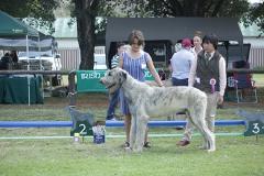 Puppy-Dog-2nd-Duross-Dublin