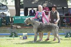 SA Bred Dog 2nd Cammysmanor Stanley Wallis
