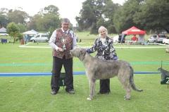 Best-Dog-or-Bitch-Never-Won-a-CC-Cammysmanor-Stanley-Wallis